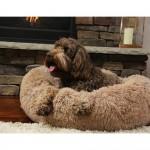 Peaceful Pooch Κρεβατάκι σκύλου και κατοικιδίων Ø76 εκ. Medium Size